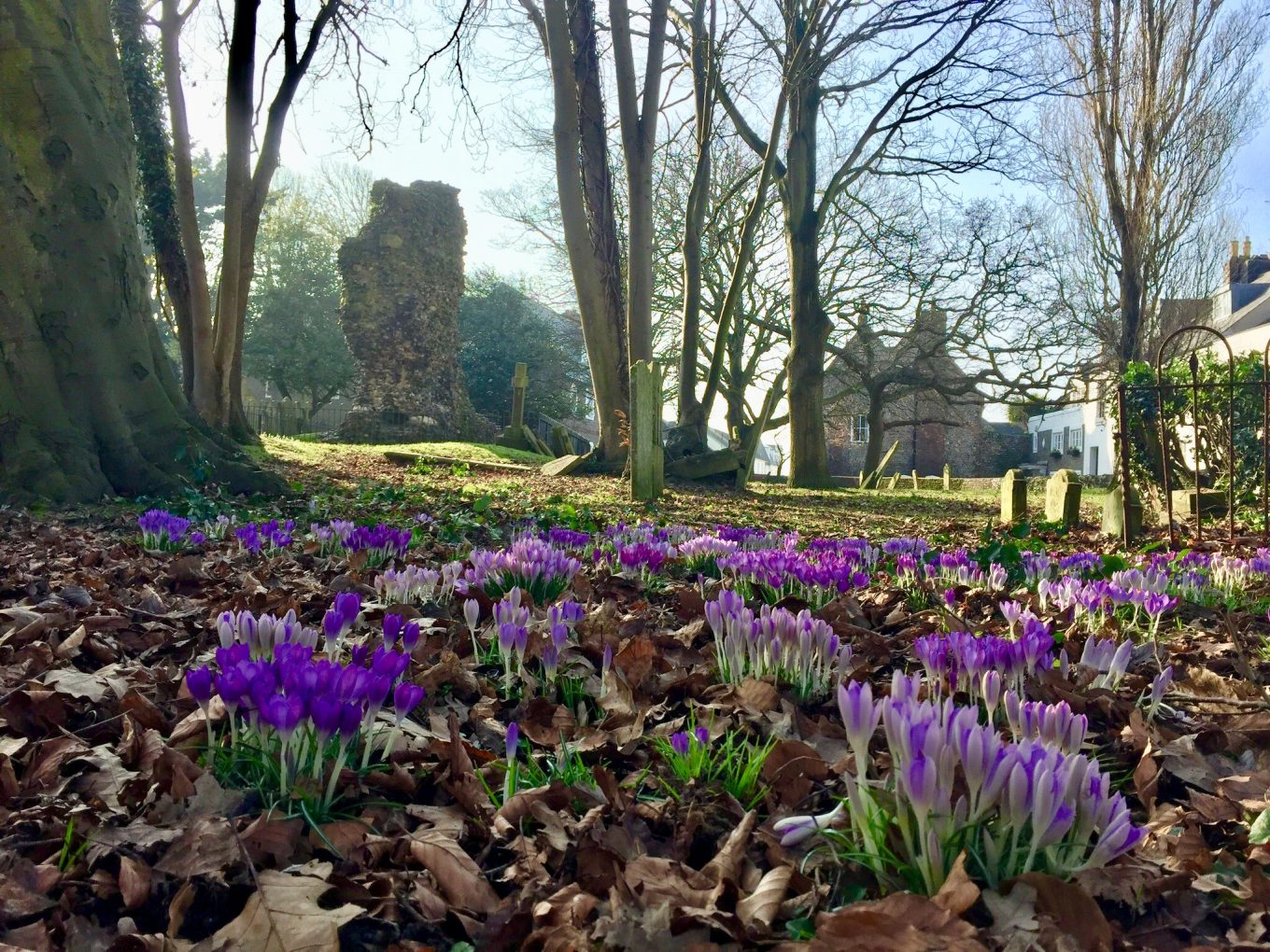 Spring in the ruins at St Mary's Church